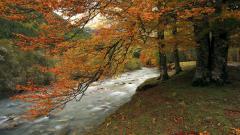 Fall Tree 29490