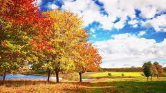 Fall Trees 29486