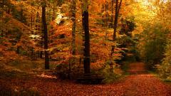 Fall Trees 29487