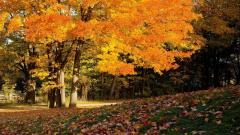 Fall Trees 29494