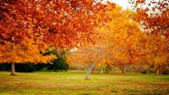 Fall Trees 29502