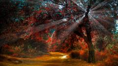 Fall Trees Wallpaper 29484