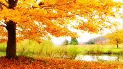 Fall Trees Wallpaper 29488