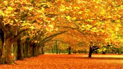 Fall Trees Wallpaper 29507