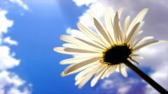 Flower Backgrounds 18201