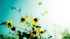 Flower Backgrounds 18206