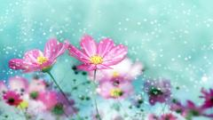 Flower Backgrounds 18213