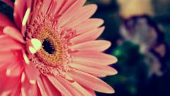 Flower Backgrounds 18215