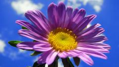 Flower Backgrounds 18219