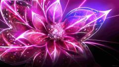Flowers Wallpaper 5570