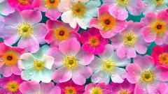 Flowers Wallpaper 5596