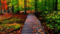 Free Autumn Wallpaper 20812