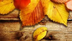 Free Autumn Wallpaper 20814