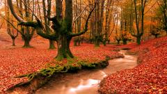 Free Autumn Wallpaper 20818