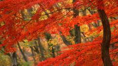 Free Autumn Wallpaper 20821