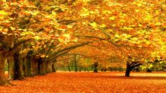 Free Autumn Wallpaper 20822