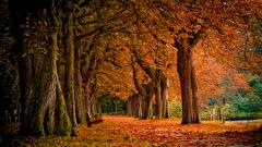 Free Autumn Wallpaper 20823