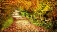 Free Autumn Wallpaper HD 20813