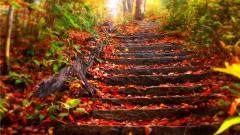 Free Autumn Wallpaper HD 20816