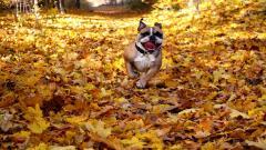Free Dog Mood Wallpaper 43354