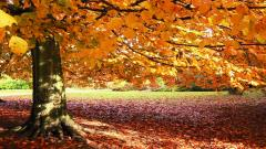 Free Fall Backgrounds 18180