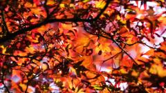 Free Fall Leaves Background 20809