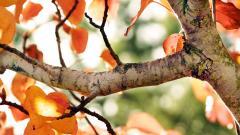 Free Fall Trees Wallpaper 29491