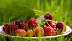 Free Raspberries Wallpaper 29083