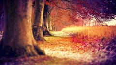 Free Red Forest Wallpaper 33530