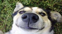 Funny Dog Close Up Wallpaper 39584