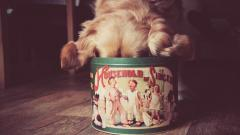 Funny Dog Mood Wallpaper 43352