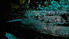 Glow Worm Cave 8755