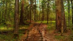 Gorgeous Trail Wallpaper 45037