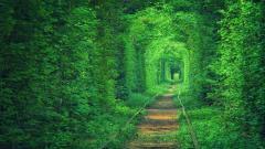 Green Background 21876