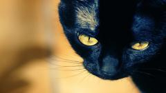 HD Black Cat Wallpaper 24148