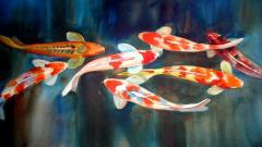 Koi Fish 7920