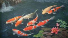 Koi Fish 7923