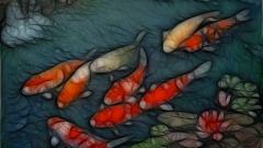 Koi Fish 7924