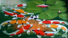 Koi Fish 7928
