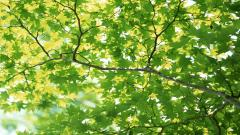 Leaves Background 20797