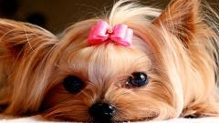 Little Dogs 9189