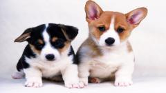 Little Dogs 9205