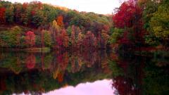 Lovely Fall Trees Wallpaper 29503