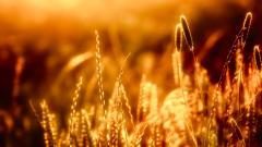 Lovely Orange Sunset 30014
