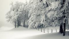 Lovely Snowy Trees Wallpaper 32386