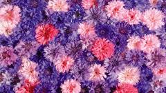 Neat Flower Backgrounds 18204