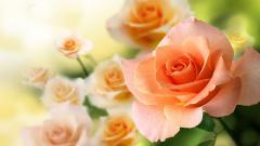 Peach Flowers Wallpaper 16791