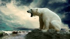 Polar Bear 13025