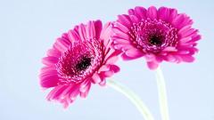 Pretty Pink Flower Wallpaper 41042