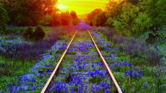 Pretty Train Track Wallpaper 37965